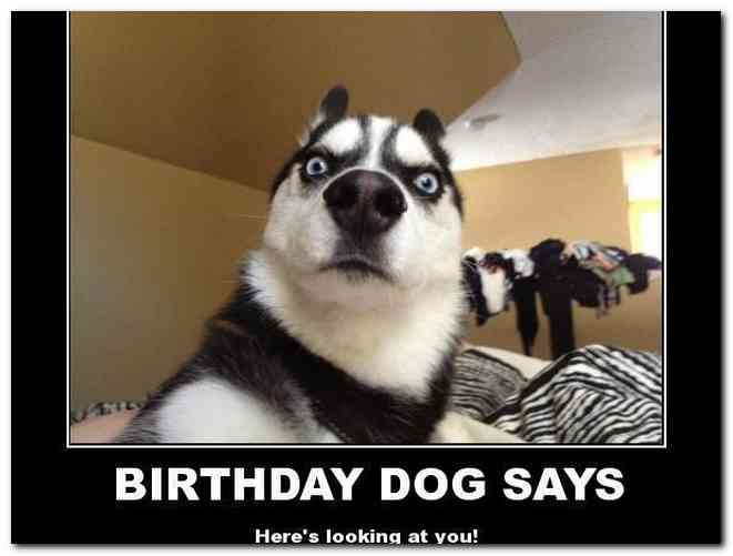 Happy Birthday Meme With Dogs Posted