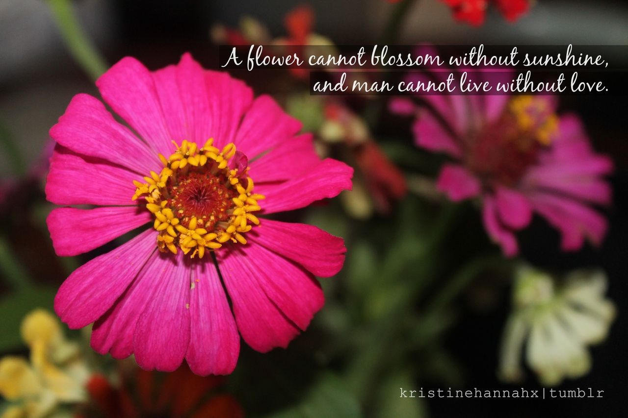 Love Quotes With Flowers A Flower Canot Blossom Without Sunshine And