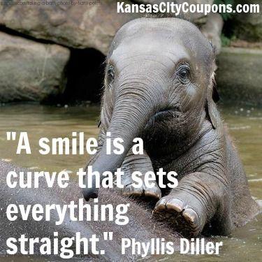 Quotes Quote Kansascity Kansascitycoupons Cute Babyelephant Elephant Smile Elephant Quotes Elephant Elephant Lover