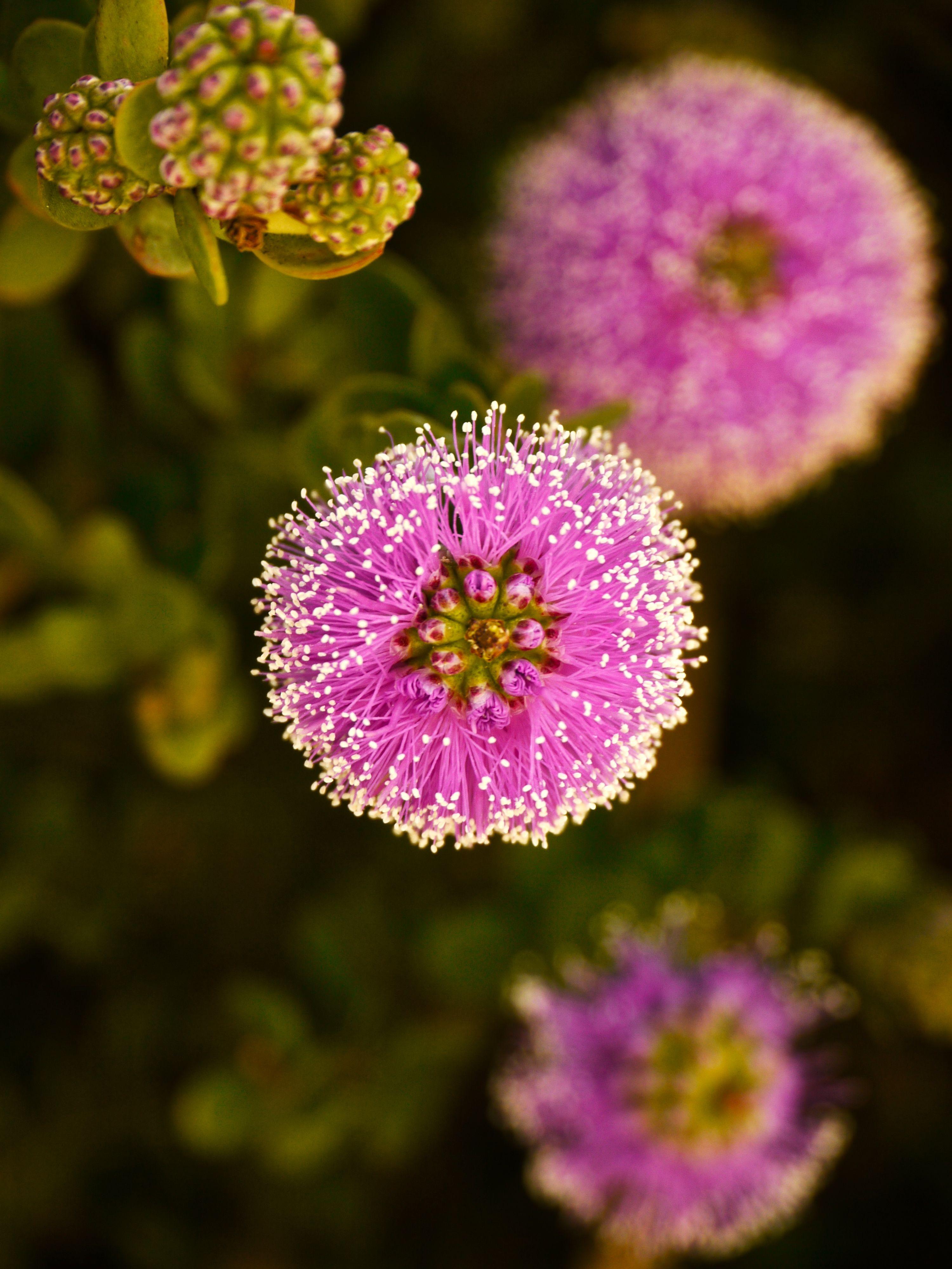 Fibre optic christmas flowers and xmas flowers - Fiber Optic Flowers Google Search