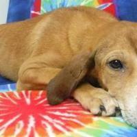 Available pets at Wright-Way Rescue in Morton Grove, Illinois #mortongrove