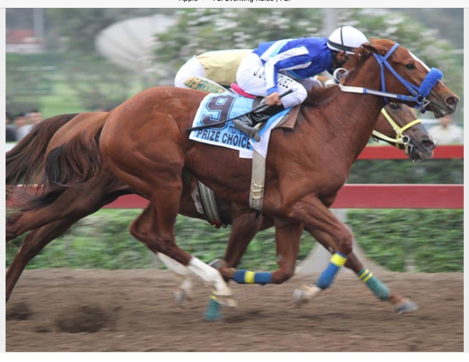 Pure Prize, great racehorse, great pedigree! Secretariat is in his blood!