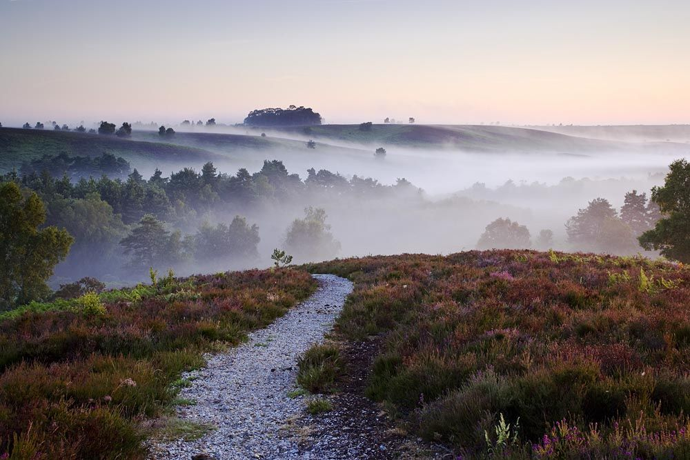 Mark Bauer Rockford Common New Forest Hampshire England Uk Landscapes Landscape Photography New Forest England