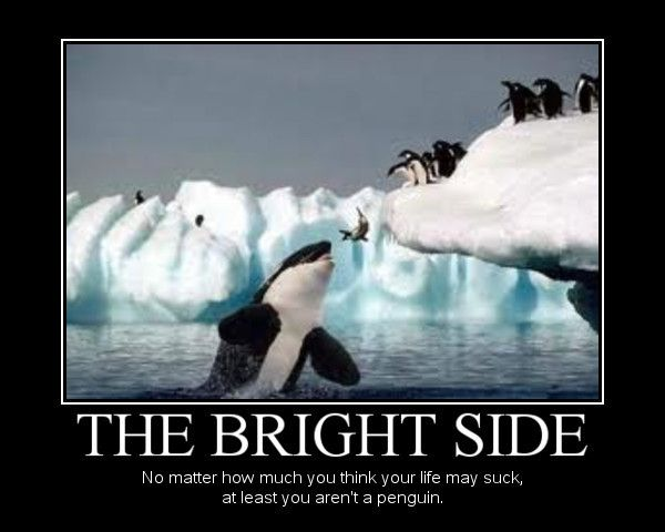Demotivational Poster: The Bright Side - No matter how much you think your life may suck, at least you aren't a penguin.