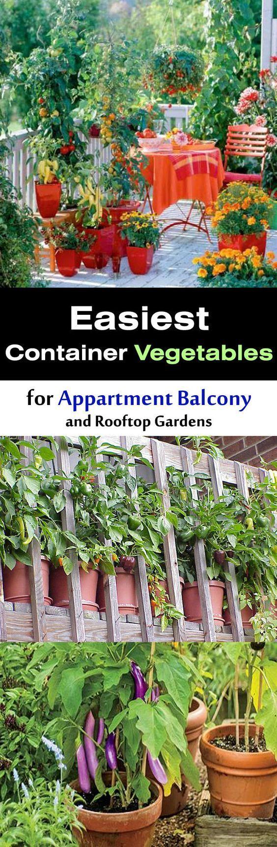 Easiest Vegetables for Balcony & Rooftop Garden ...