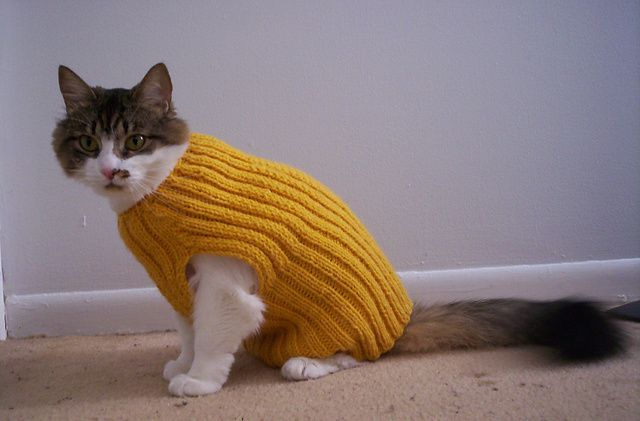 Ravelry Cats Love Sweaters Pattern By Christine Landry Knitting