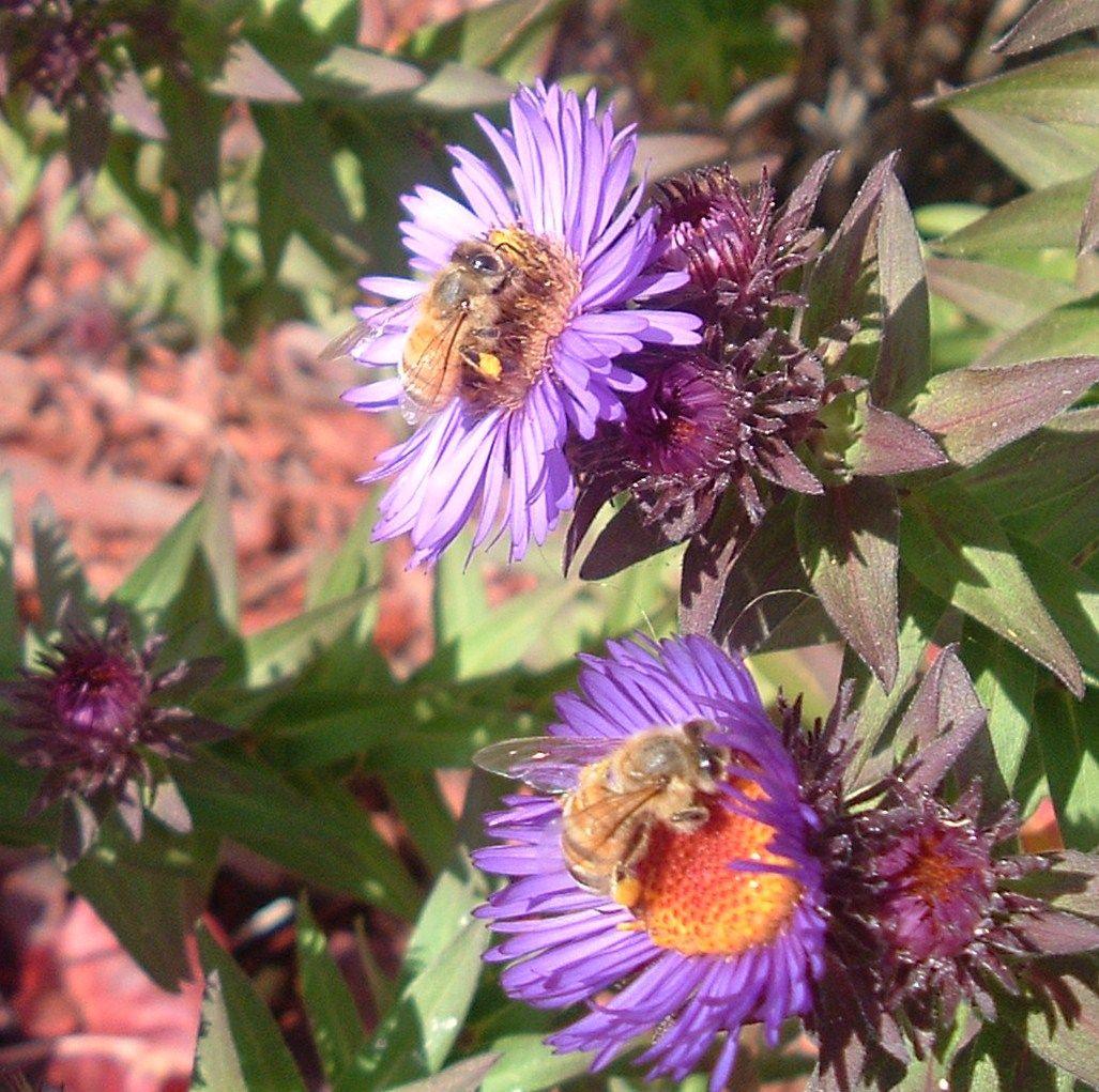Pin Von Kathrin Wagner Auf Pflanzen: Good Info On Bee Keeping Website