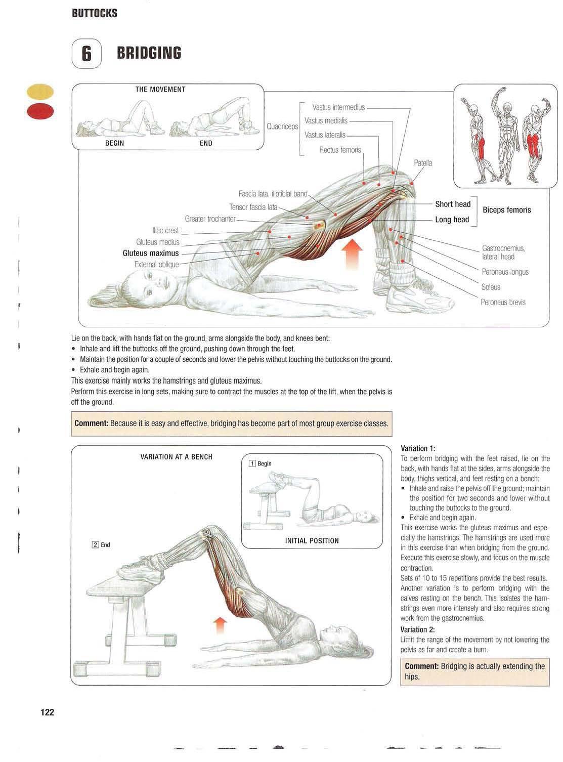 Strength training anatomy 6. Bridging Bigger/bubble butt/booty ...