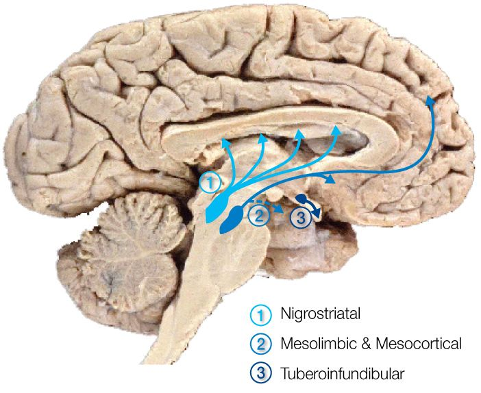 Dopamine | Addiction | Pinterest | Ventral tegmental area and ...