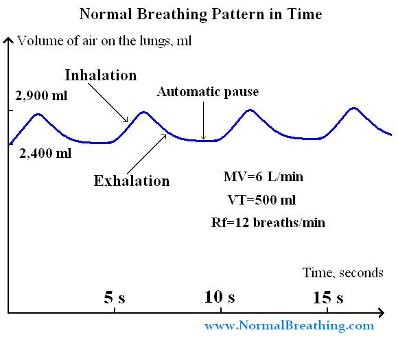 Normal Respiratory Rate Volume Breathing Chart Sleep Apnoea Respiratory Therapy Obstructive Sleep Apnoea