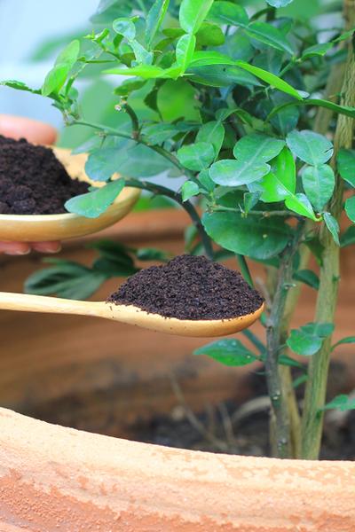 d0dc6c74e306adb141ba50fad5669eaa - Coffee Grounds Good For Vegetable Gardens