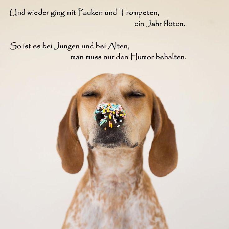 Bilder Mit Dem Tag Hund Seite 4