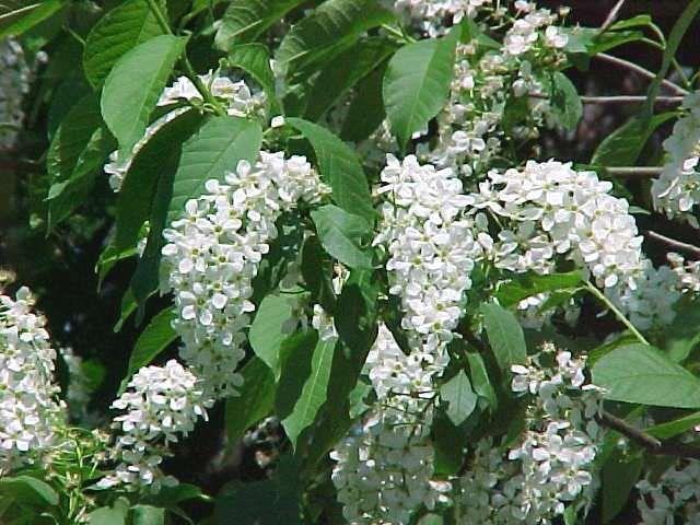 Pin by diana ursu on plantworld magic pinterest tree seeds growing flowers mightylinksfo