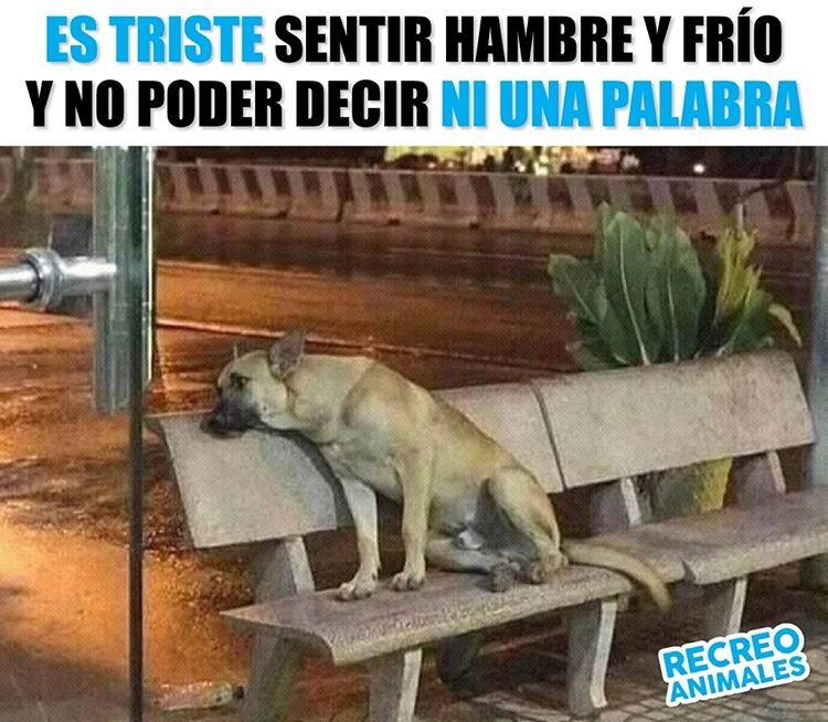 Pin On Perros