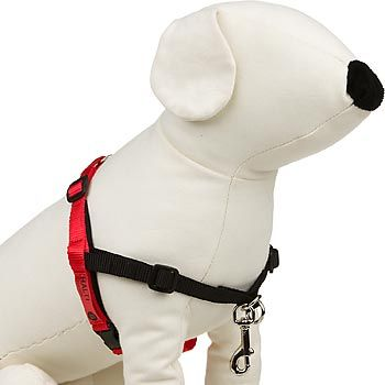 The Company Of Animals Halti Dog Harness Dog Harness Dogs Dog Care