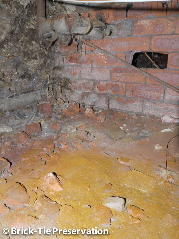 This Is The Spectacular Colour Of Millions Of Dry Rot Spores