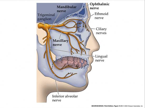 Dentaltown Dental Anatomy And Tooth Morphology Dental Anatomy