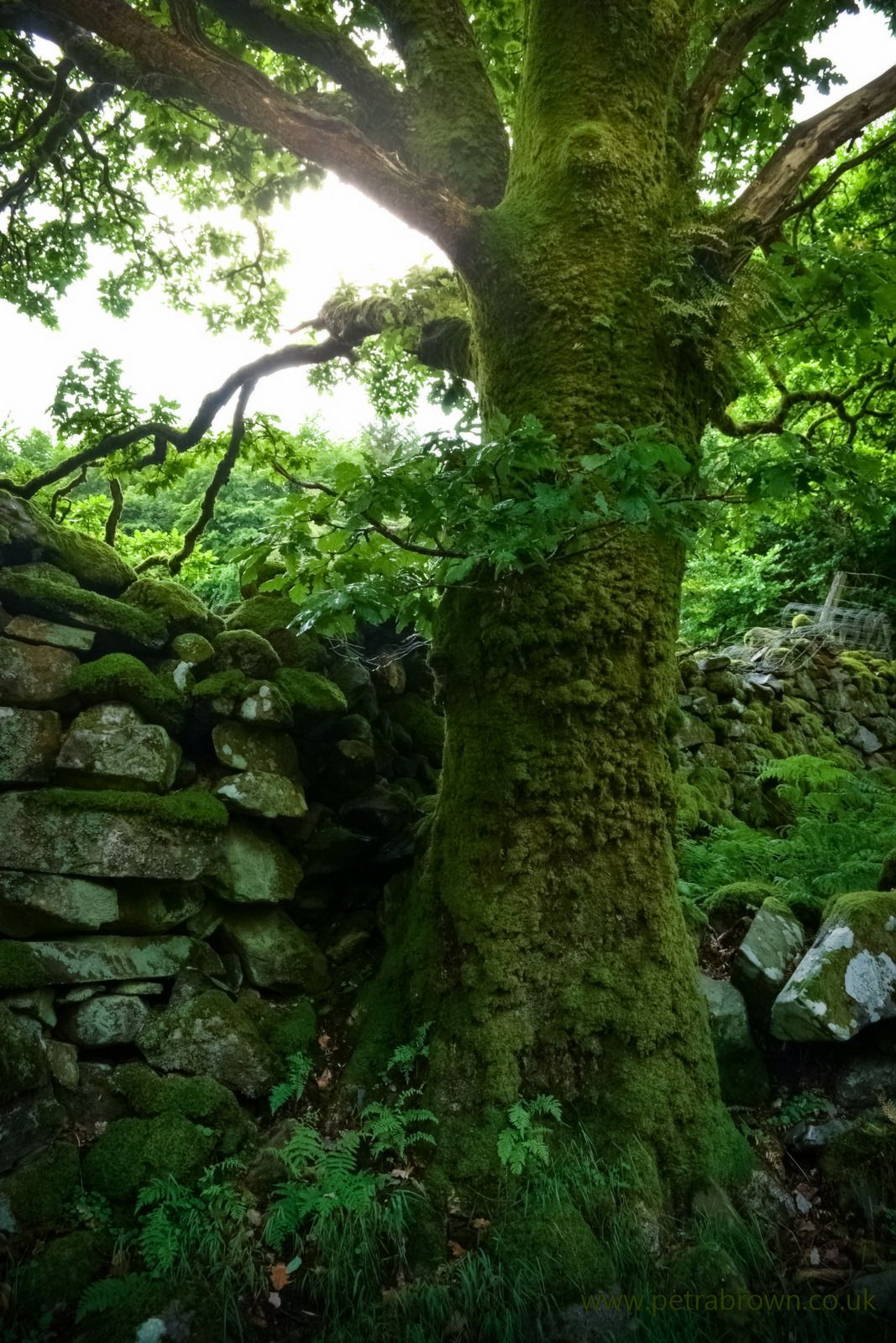 Clothéd all in greeno! Magical garden, Tree, Nature