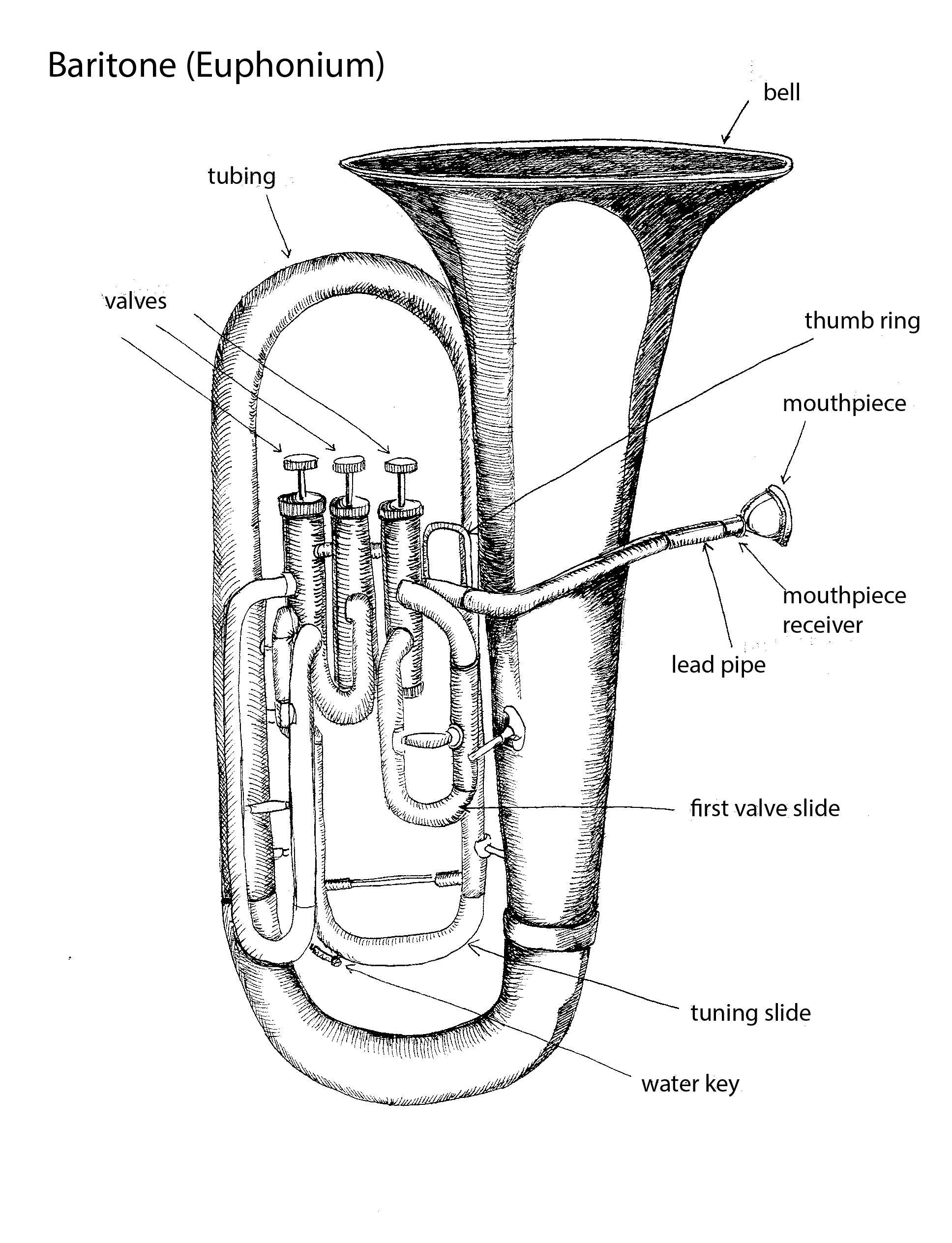 Parts Of The Baritone Euphonium By Tracie Noles Ross