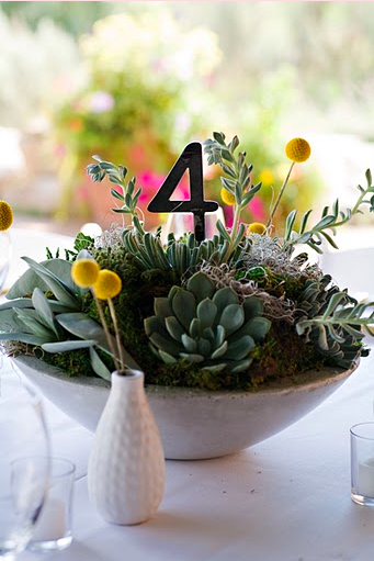 succulent centerpiece with table number