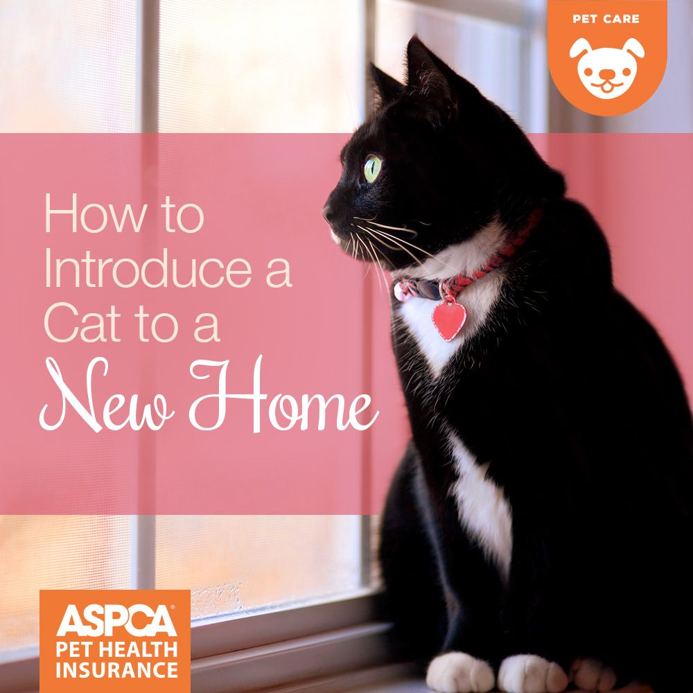 How To Introduce A Cat To A New Home Cats Cat Care Pet Health Insurance