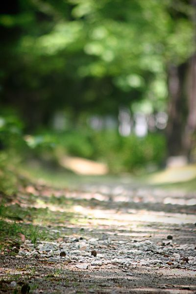 Walking Your Path Art Print By Artsycanvasgirl Designs Society6 Photoshop Backgrounds Blur Background Photography Blur Photo Background