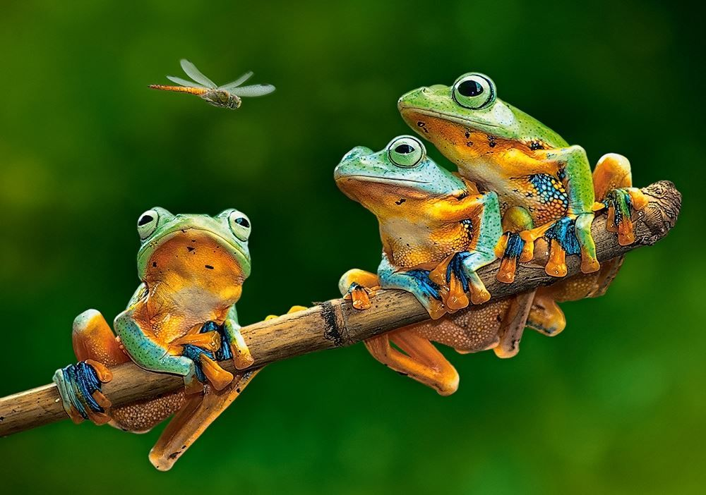 The Frog Companions 500pc Jigsaw Puzzle By Castorland