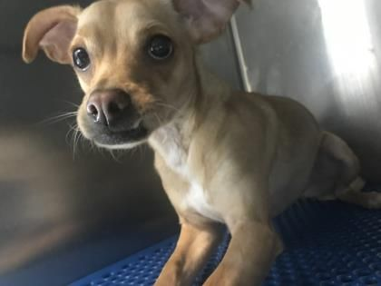 UPDATE:  Max's Current Status Is Unknown.  MAX located in El Paso, TX, to be destroyed 5/11/17