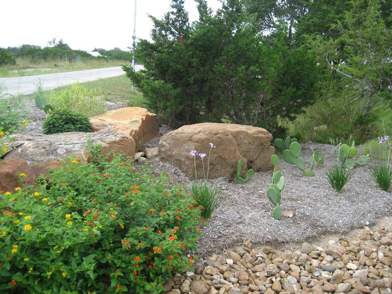 Austin Native Plants, Native Texas Plants, Drought Tolerant Landscaping - Austin Native Plants, Native Texas Plants, Drought Tolerant
