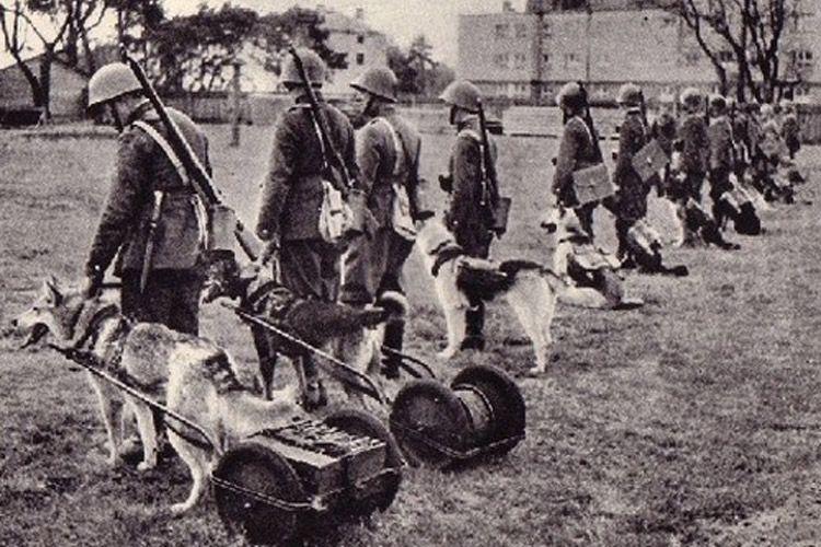 1918 in Germany