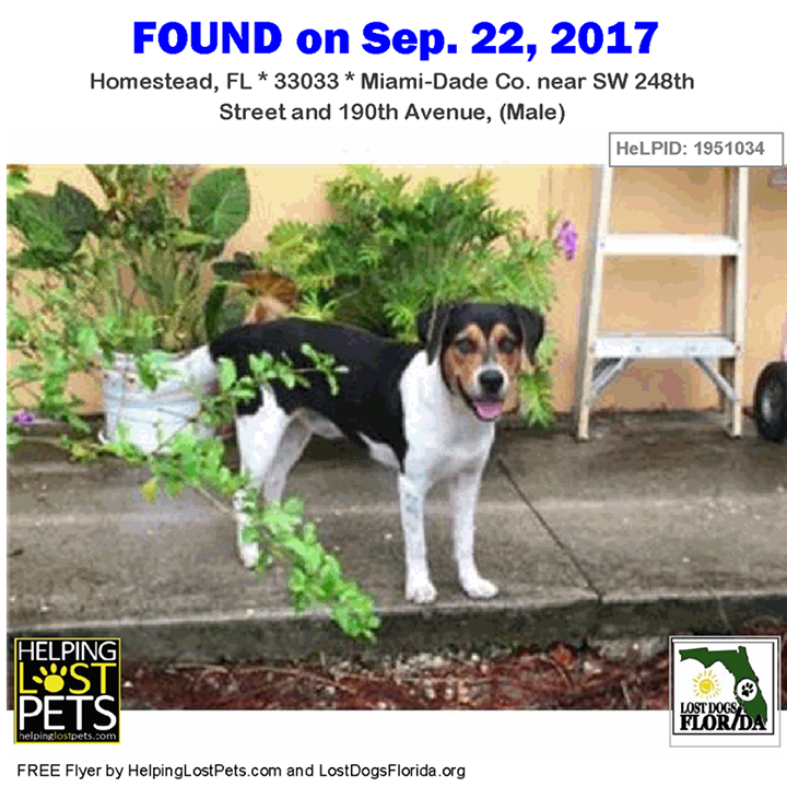Pin On Found Dogs