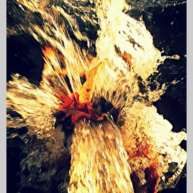flor d'água.