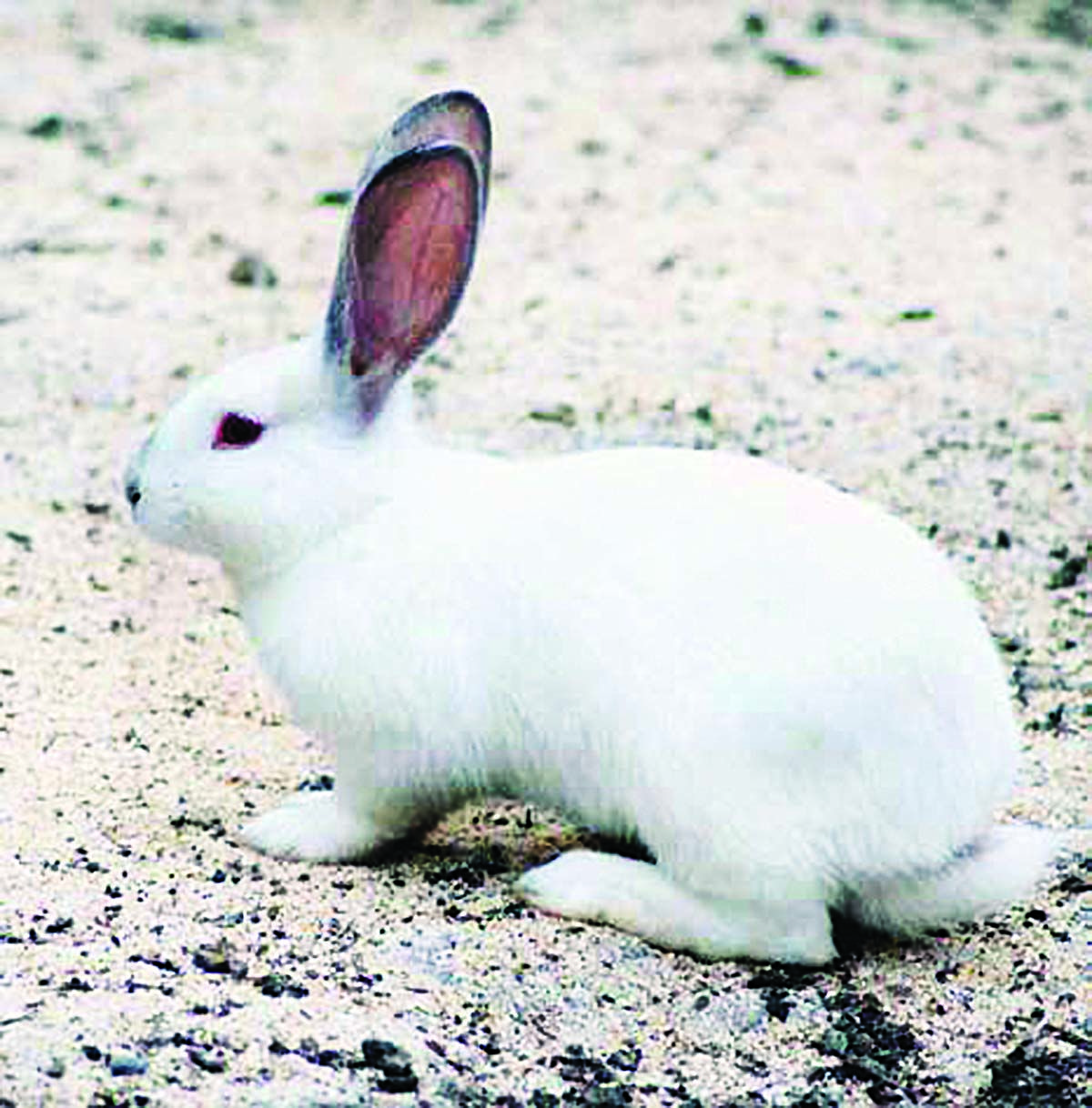 20 Rabbits ideas in 20   raising rabbits, meat rabbits, rabbit