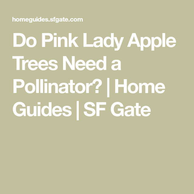 Do Pink Lady Apple Trees Need A Pollinator Pink Lady Apples Pollination Apple Tree