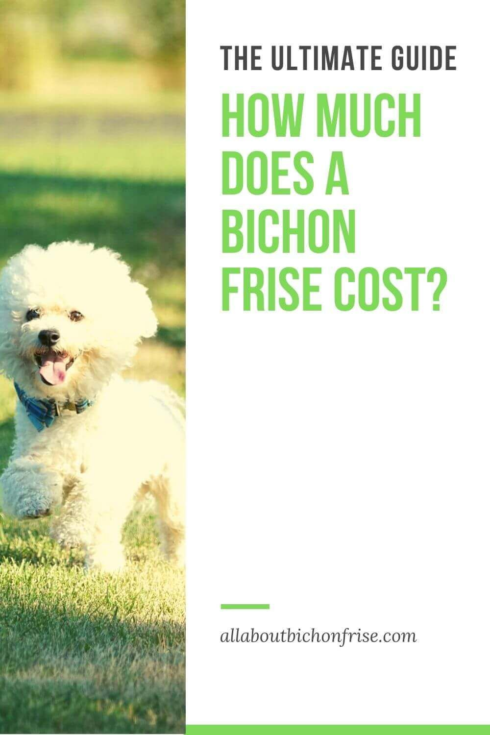 How much does a bichon frise cost ultimate guide in 2020