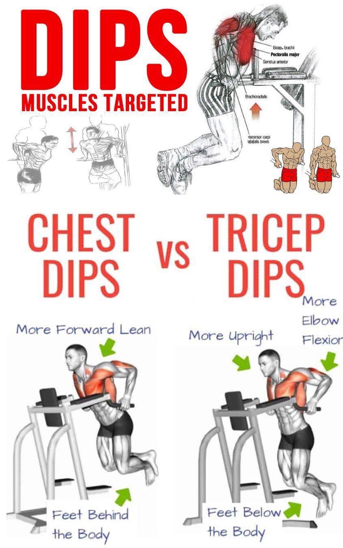 Pin On Biceps Triceps