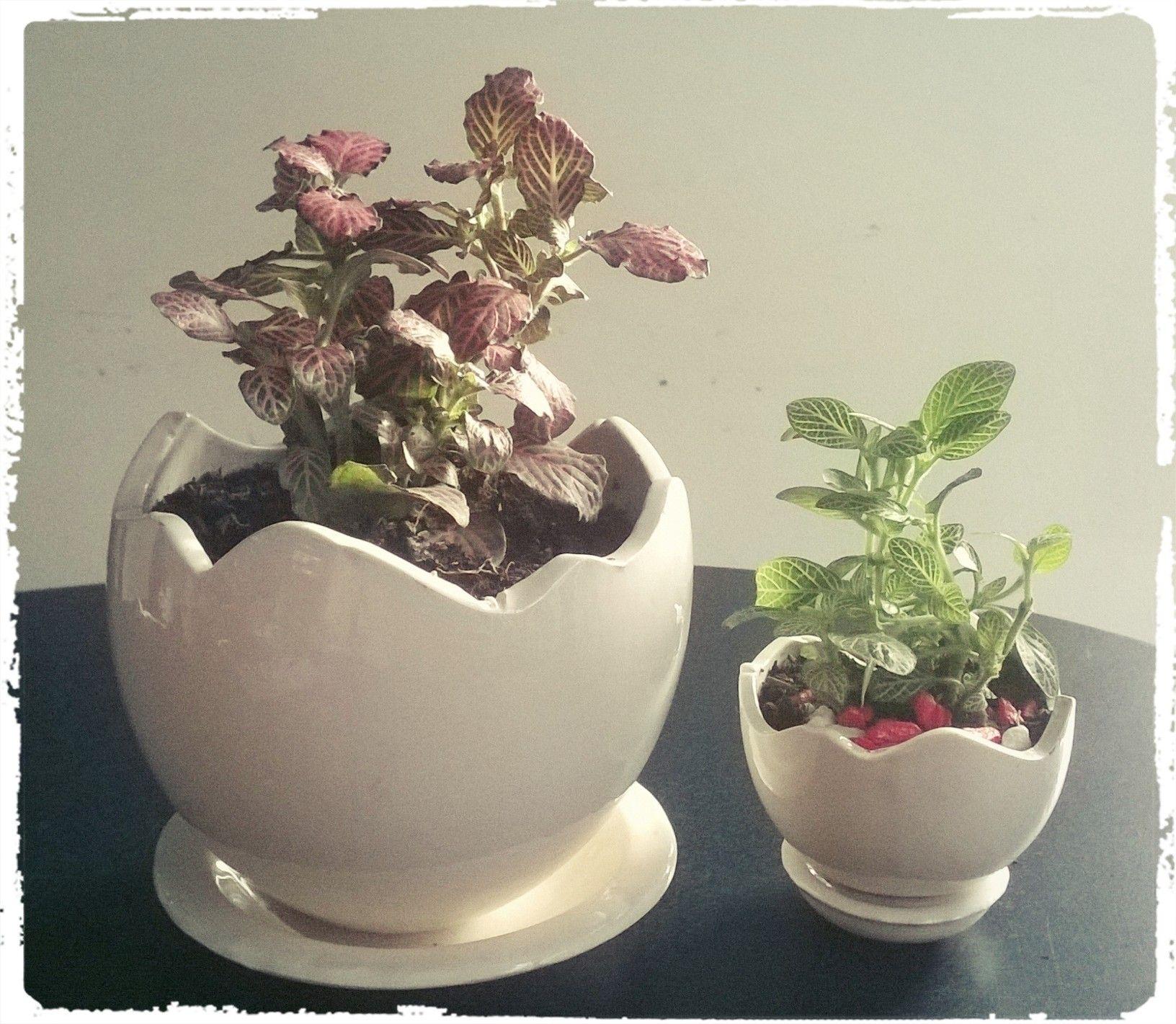 Plantas decorativas .REF Huevito. GRANDE $ 24.900---PEQUEÑO $ 15.900 ...