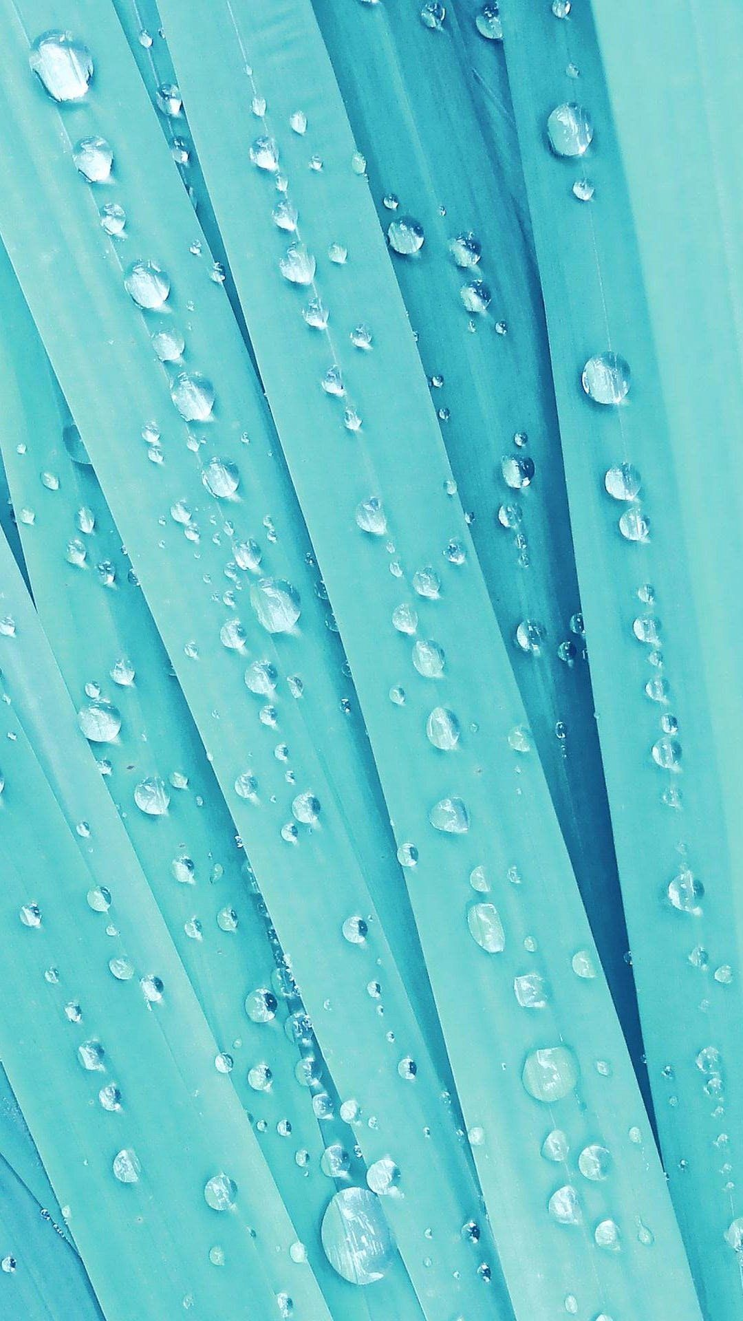 Skyblue Color Filtered Grass With Waterdrops Tap To See More