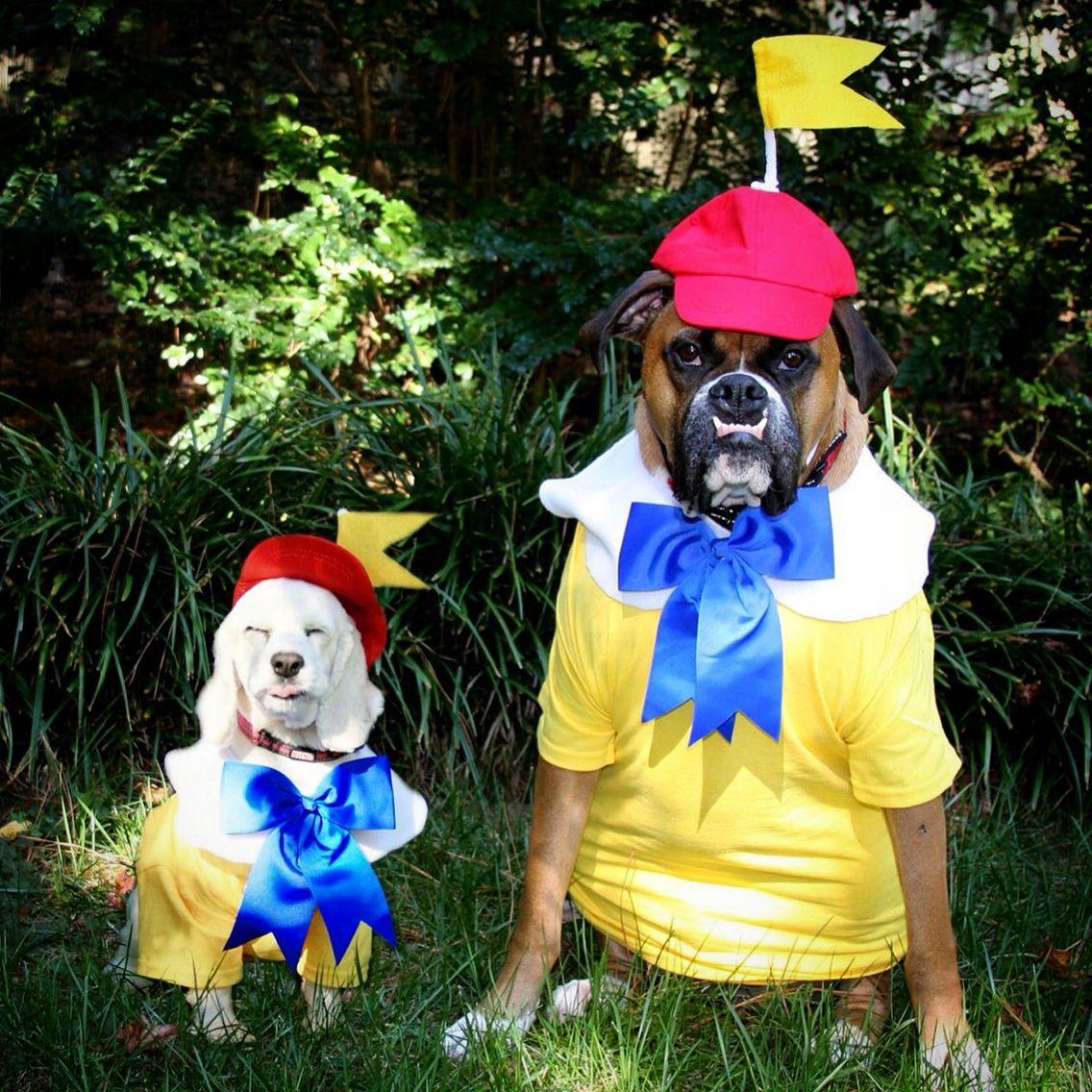 Tweedle Dee Tweedle Dum Dog Costumes Dog Halloween Dog