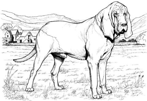 DOGS - Bloodhound | coloring animals | Pinterest | Bloodhound