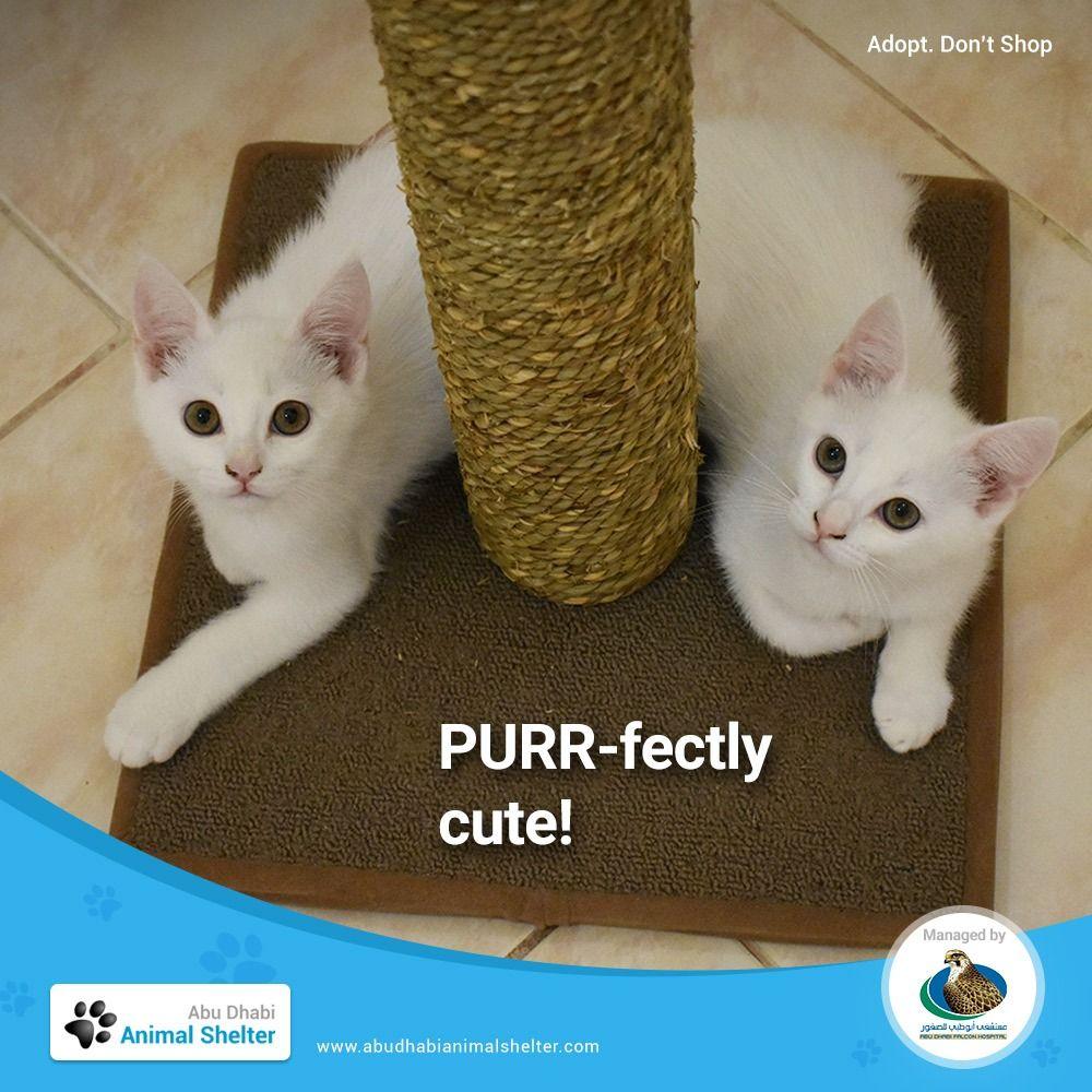 Abu Dhabi Animal Shelter In 2020 Animal Shelter Shelter Animals