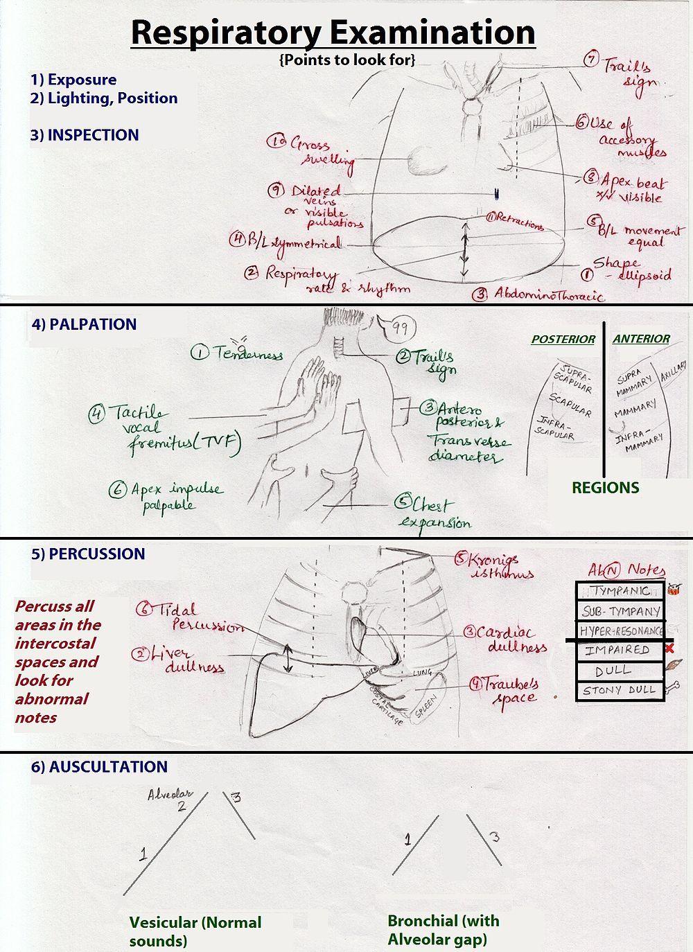 Respiratory examination Wikipedia, the free encyclopedia