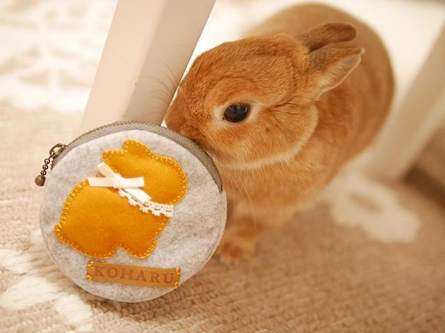 * * * @smilelapin2012 さんで 注文していたお品2つめはこちら。 コインケース(*´∀`*) 可愛いでしょー♡ . わたしは薬を常に持ち歩くタイプなので (持病とかではないですが) 薬入れとして使います 大切に使おーう♡ . #うさぎ #ふわもこ部 #ネザーランドドワーフ #instagood #netherlanddwarf #instaanimal #rabbit #rabbitstagram #lapin  #bunny #bunnystagram #lumixgm1 #愛しのこはる
