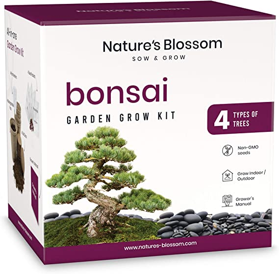 Bonsai Starter Diy Kit The Complete Growing Kit To Easily Grow 4 Bonsai Trees From Seed In 2020 Bonsai Tree Bonzai Tree Unusual Gardening Gifts