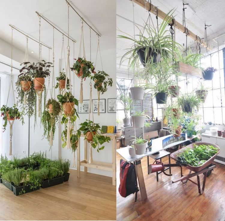 Pin by C . on Small home in 2020 Plant hanger, House