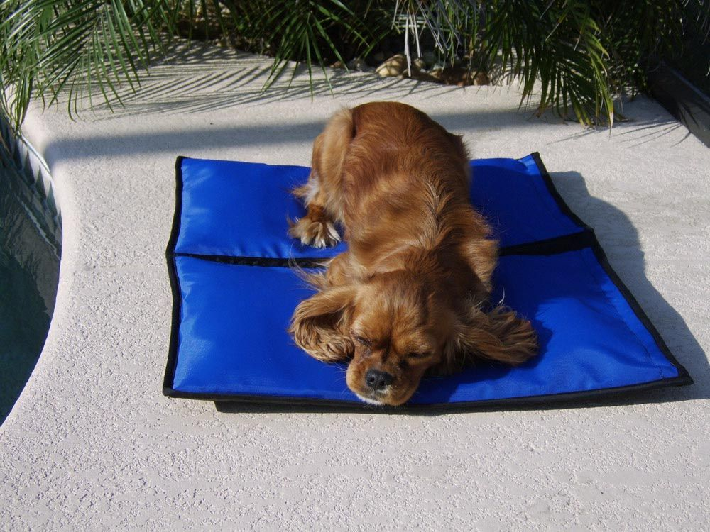 Contact Support Dog cooling pad, Puppies, Dogs