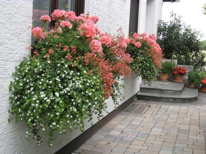 Schneeflöckchen und Diaskien flower pots Pinterest