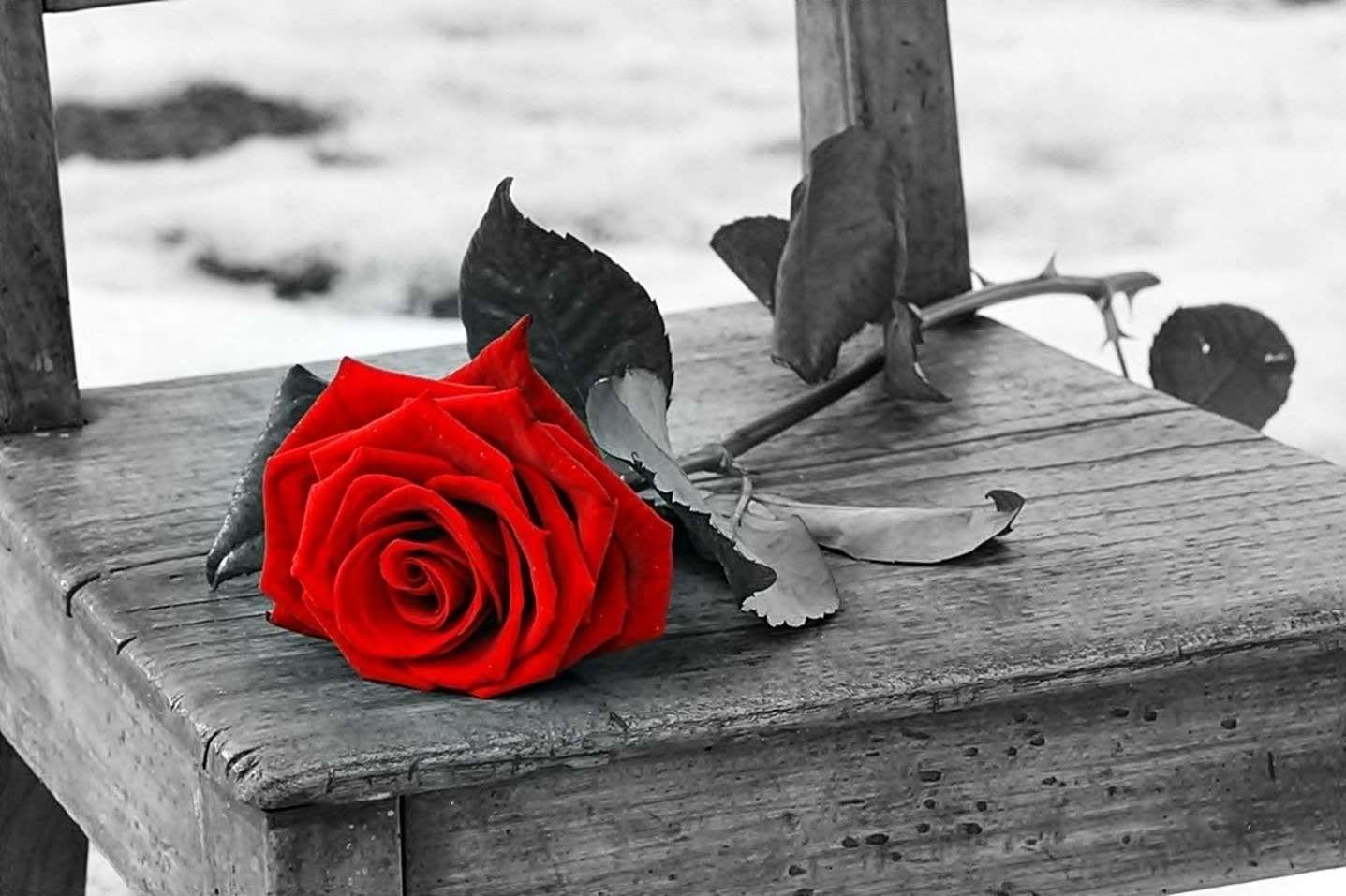 Belle Rose Amour Art De Parapluie Musique Rose Photo Noir Et Blanc