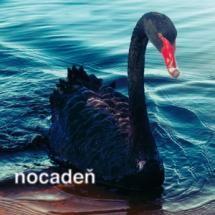 #Nocaden #NestrielajteDoLabuti