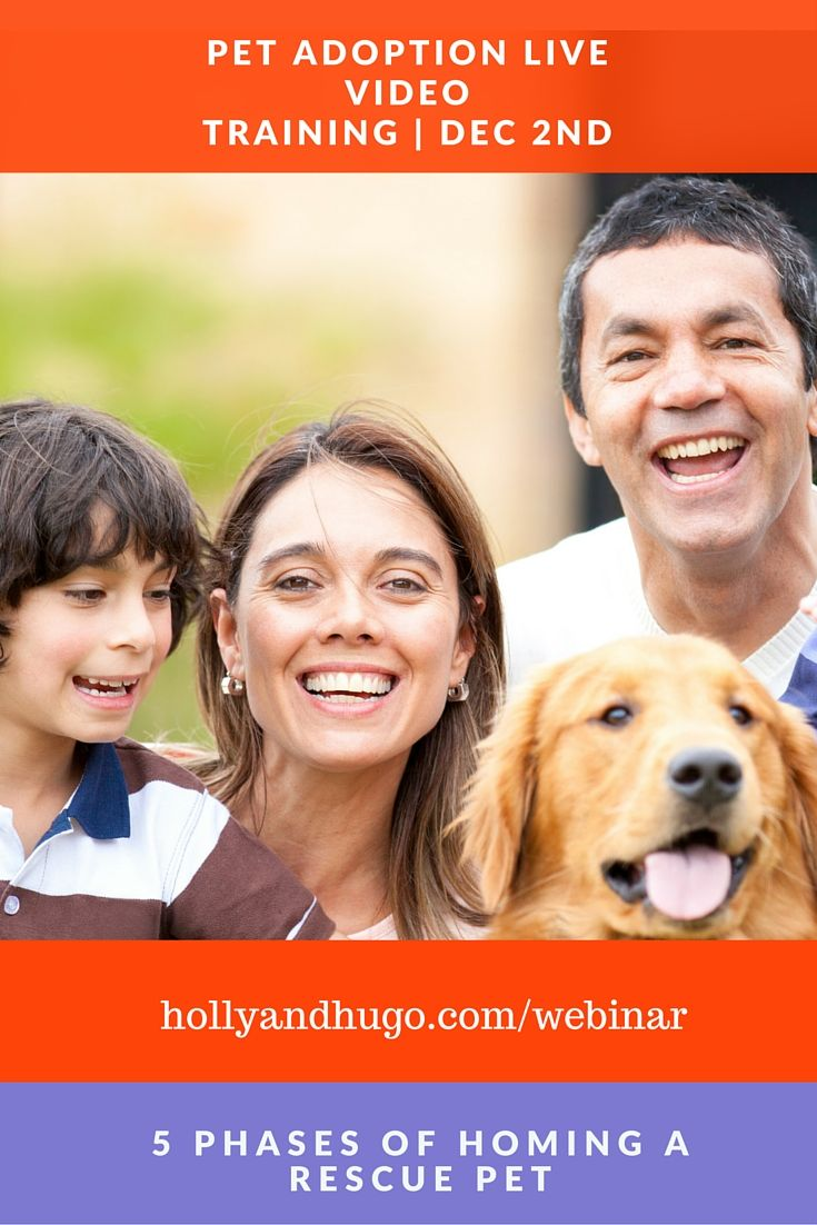 Today We Are Hosting A Free Live Webinar With Dr Pippa Elliott Bvms Mrcvs If You Have Recently Adopted A Pet Or Considering Considering Adoption Webinar Pets